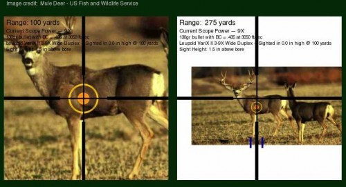Mule deer at 100 and 275 yards